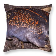 Mexican Burrowing Toad Throw Pillow