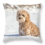 Mini Golden Doodle  Throw Pillow