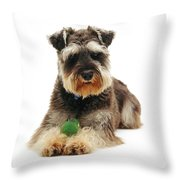 Miniature Schnauzer Throw Pillow by Jane Burton