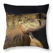Mobile Logperch Percina Kathae Throw Pillow