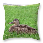 New Zealand - Pair Of Mallard Duck Throw Pillow