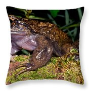 Noras Spiny Chest Frog Throw Pillow