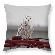 Snowy Owl 9470 Throw Pillow