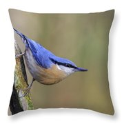 Nuthatch -- Throw Pillow