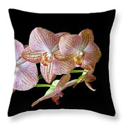 Orchid Phalaenopsis Flower Throw Pillow