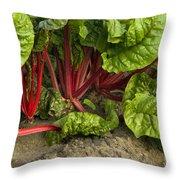 Organic Swiss Chard Throw Pillow