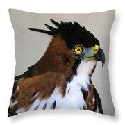 Ornate Hawk-eagle Throw Pillow