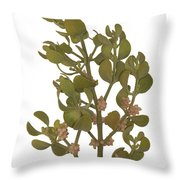 Pacific Mistletoe Throw Pillow
