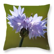 Pale Blue Bachelor Button From The Double Ball Mix Throw Pillow