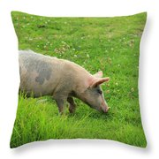 Pig In A Pasture Throw Pillow