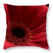 Pink Gerbera Daisy Throw Pillow