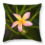 Plumeria Blossom Throw Pillow