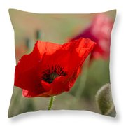 Poppies In Field In Spring Throw Pillow