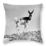 Prong-horn Antelope Throw Pillow
