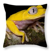 Red-eyed Treefrog, Xanthic Form Throw Pillow