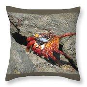 Red Rock Crab Throw Pillow