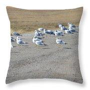 Ring Billed Gulls  Throw Pillow