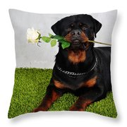 Rottweiler Kuchum Throw Pillow