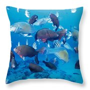 Saipan Marine Life Throw Pillow