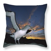 Salvins Albatross At Sunset Throw Pillow