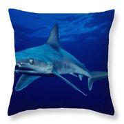 Sandbar Shark Throw Pillow