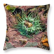 Sea Anemones Throw Pillow