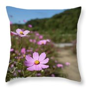 Sensation Cosmos Bipinnatus Fully Bloomed Colorful Cosmos On M Throw Pillow