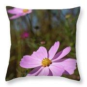 Sensation Cosmos Bipinnatus Fully Bloomed Pink Cosmos At Garde Throw Pillow