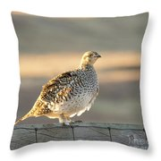 Sharp Tailed Grouse Throw Pillow