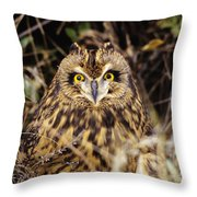Short-eared Owl Throw Pillow