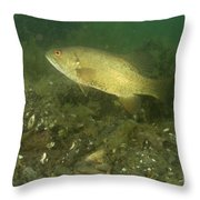 Smallmouth Bass Protecting Eggs Throw Pillow