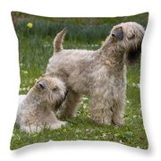 Soft-coated Wheaten Terriers Throw Pillow
