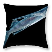 Spotfin Flyingfish Throw Pillow