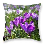Spring Crocuses Throw Pillow