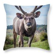 Sri Lankan Sambar Deer Male Throw Pillow