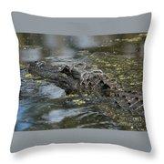 Sunbathing Gator Throw Pillow