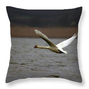 Swan During Take Off Throw Pillow