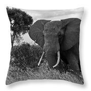 The Old Bull Throw Pillow