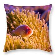 Tropical Fish Pink Clownfish Throw Pillow