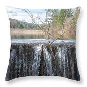 Vermont Swamp Throw Pillow