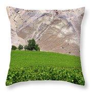 Vines Contrasting With Chiles Atacama Desert Throw Pillow