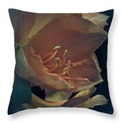 Vintage Amaryllis Throw Pillow