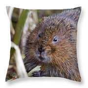 Water Vole Throw Pillow