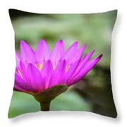 Waterlilly Throw Pillow