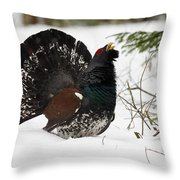 Western Capercaillie Throw Pillow