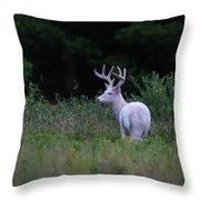 White Buck Throw Pillow