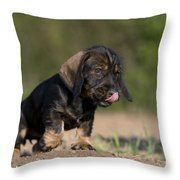 Wire-haired Dachshund Puppy Throw Pillow