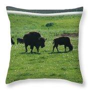 Wisconsin Buffalo Throw Pillow