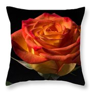 Yellow Rose With Red Tips Throw Pillow