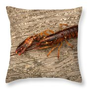 Young Lobster Throw Pillow